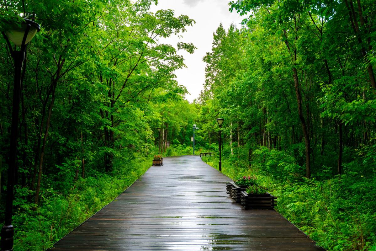 二道白河小镇东北亚植物园.jpg